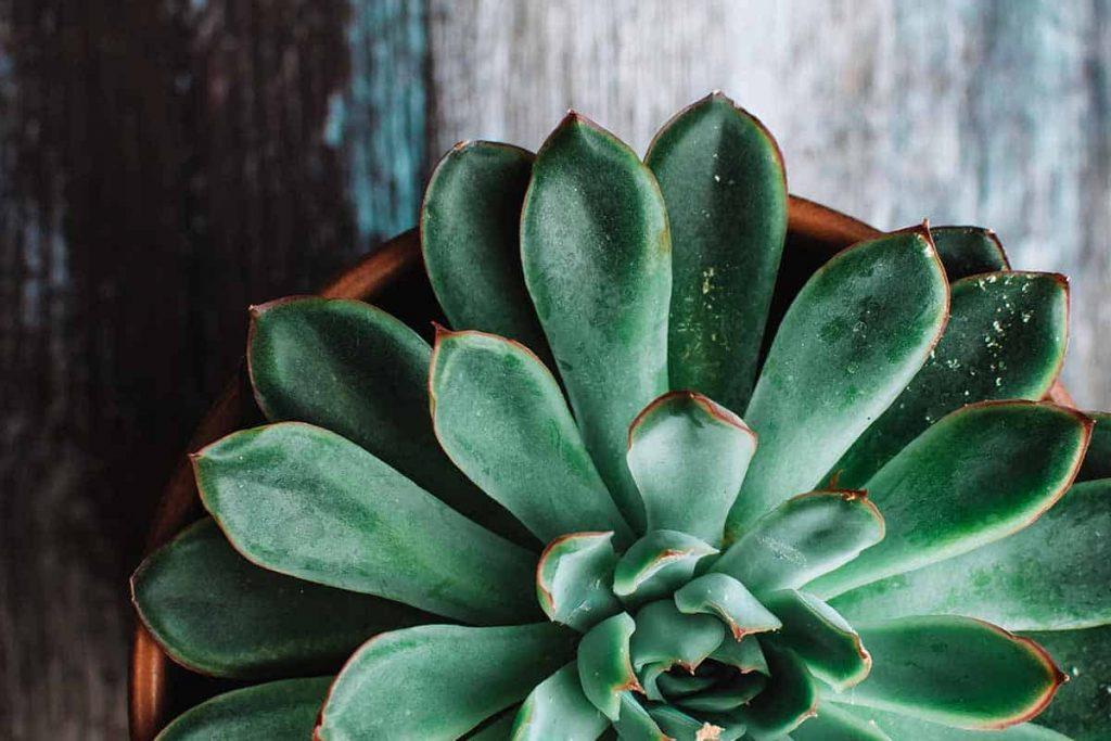 آیا واقعا نیازی به گیاهان آپارتمانی ندارید؟