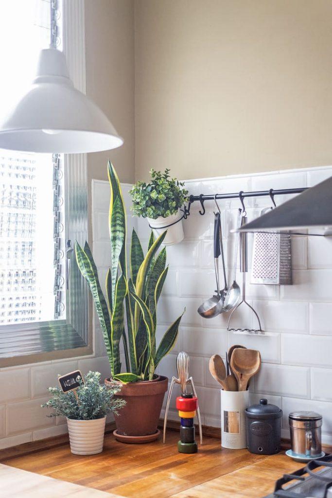 گیاهان در آشپزخانه